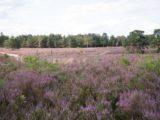 Endlose Heidelandschaft in der Gemeinde Soderstorf